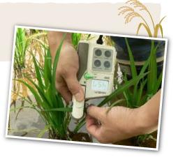 低農薬栽培